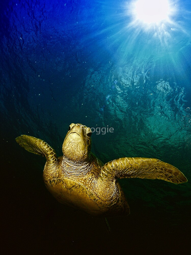 The old green turtle by Froggie