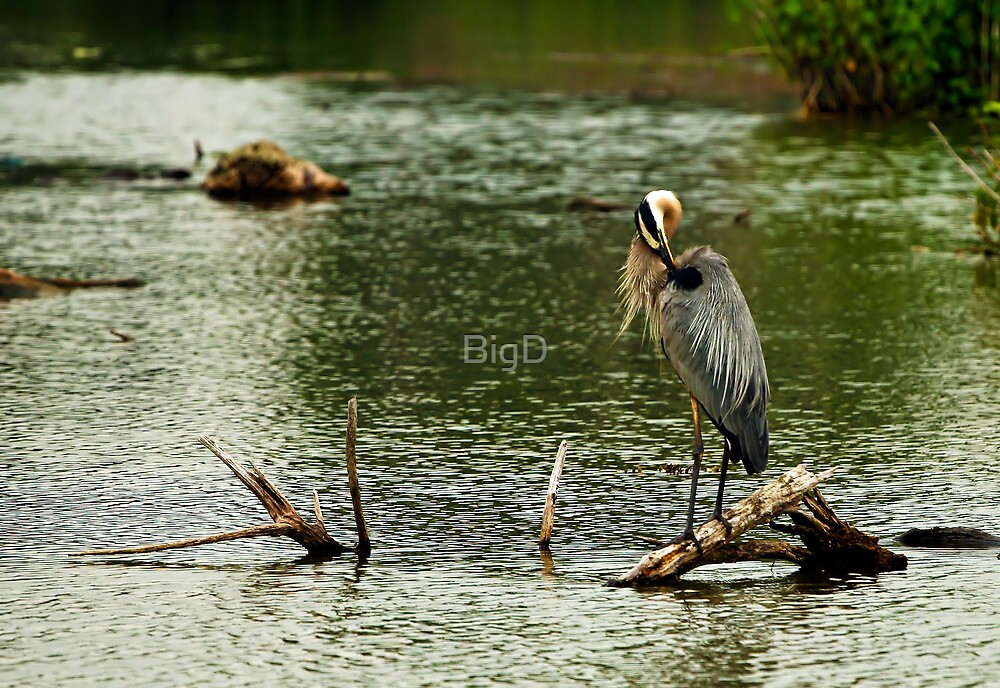 I Have an Itch by BigD