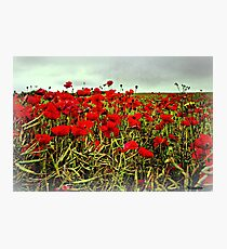 Red Glow of Poppy Fields Photographic Print