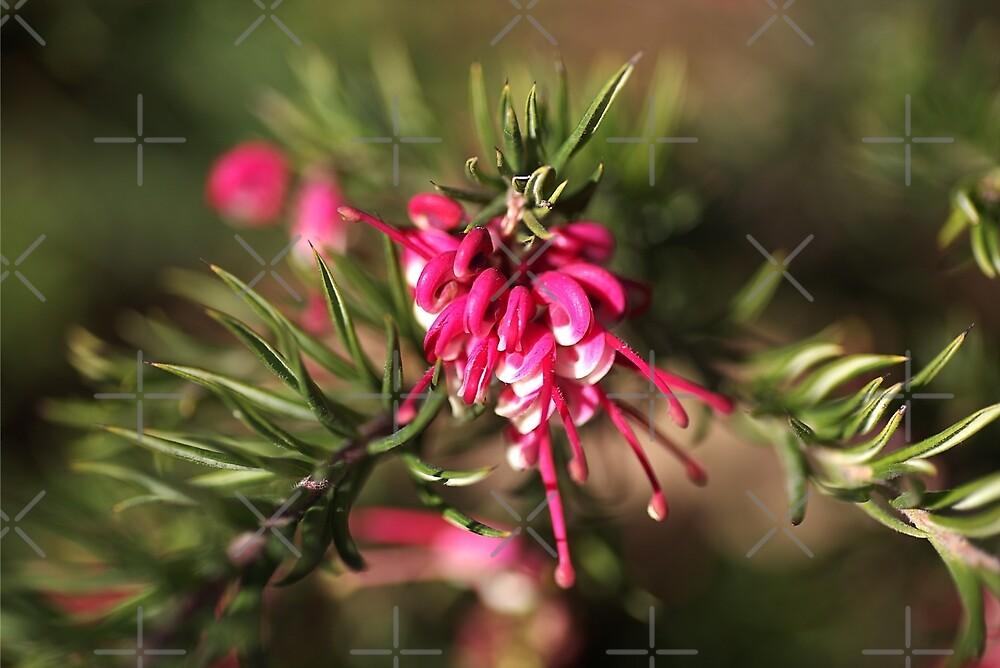 Lush Grevillea by Joy Watson
