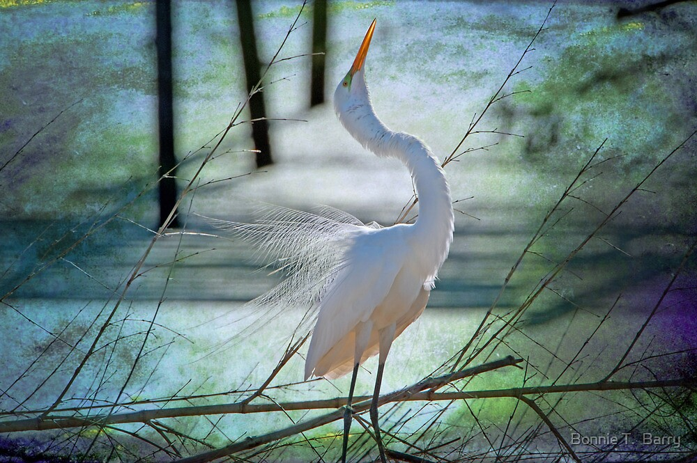 Avery Island Egrets--The Courtship Dance  by Bonnie T.  Barry