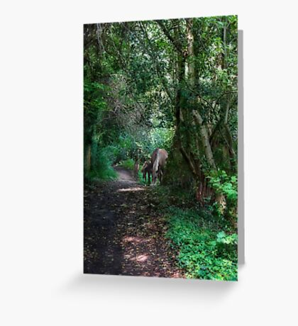 Forest Ponies Greeting Card