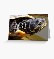 Turtle Head Greeting Card