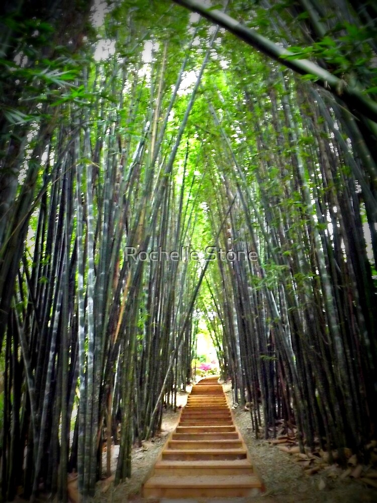 The Bamboo Avenue by Rochelle Stone
