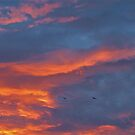 Birds Against Sunset by tomeoftrovius