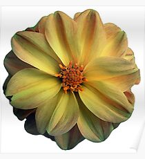 Pale Yellow Flower Poster