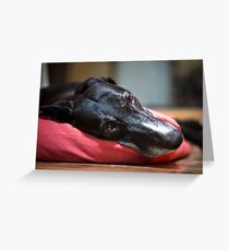 snoozing foster Phoebe Greeting Card