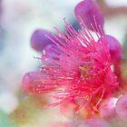 Gum Blossom by Linda Lees