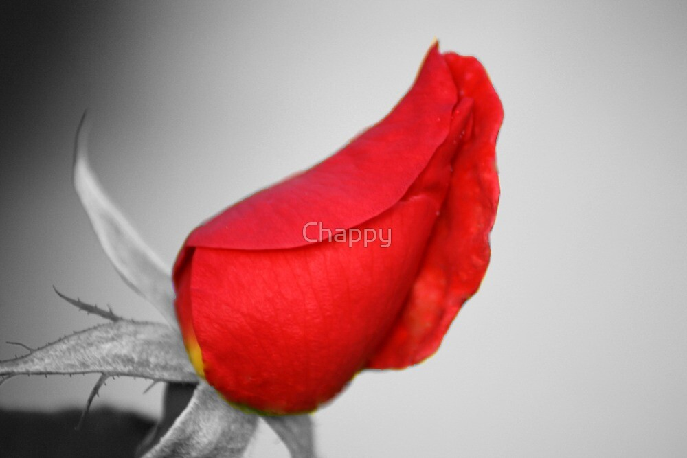 Red beauty by Chappy