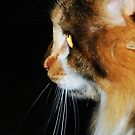Cat Profile by Lyccid