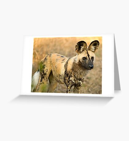 African Wild Dog Close Up Greeting Card