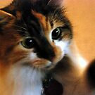 Calico Cat with Dilated Pupils by Lyccid