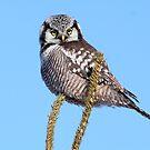 Owl On A Stick by Gary Fairhead
