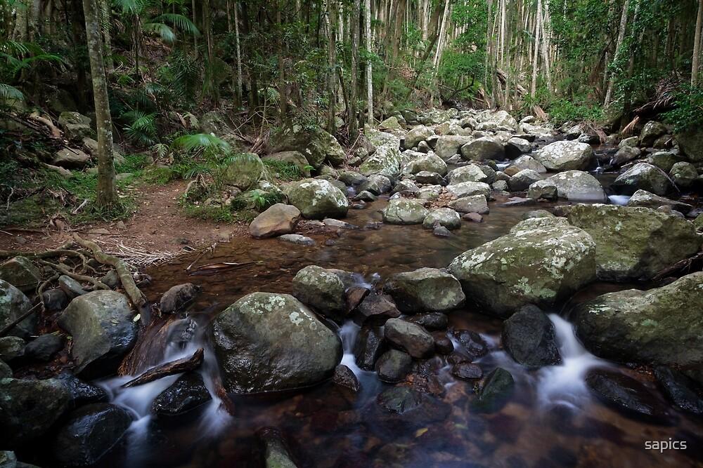 Rainforest Vista by Robert Armitage
