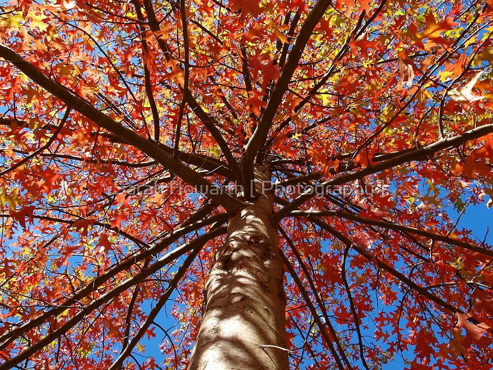 Autumn Leaves by Sarah Howarth [ Photography ]
