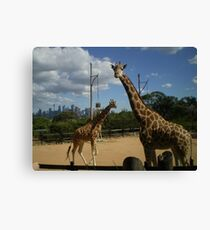 who looking at who Canvas Print
