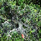 What A Web We Weave by ScenerybyDesign