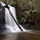 Lower Lillydale Falls by Sarah Howarth [ Photography ]