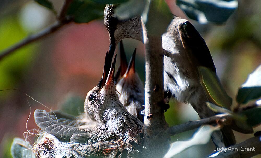 Update Hummingbird Babes  by Judy Grant