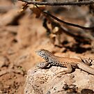 Whiptail by Kim Barton