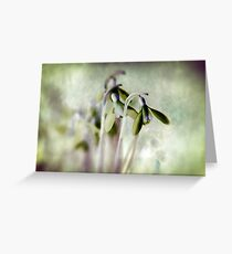 Subtle Snowdrop Greeting Card