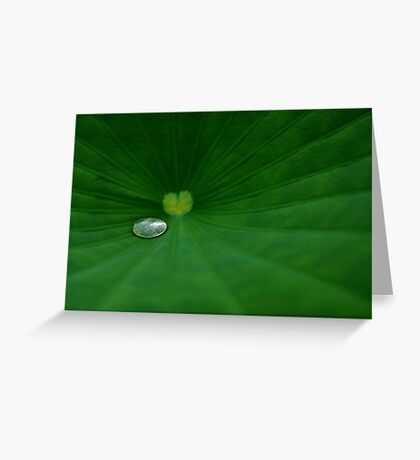 Macro 10896 Greeting Card