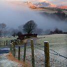 Creeping Mist by Jeanie