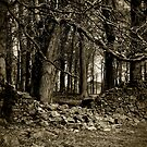 Bradgate Park  by Mike Topley