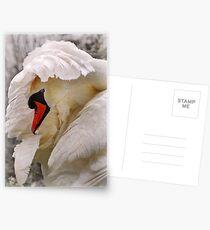 am i a swan yet? Postcards