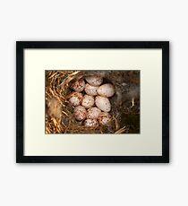Chickadee Nest! Almost a Dozen Eggs! Framed Print