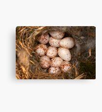 Chickadee Nest! Almost a Dozen Eggs! Canvas Print