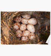 Chickadee Nest! Almost a Dozen Eggs! Poster
