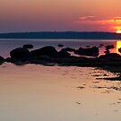 Caumsett @ Sun Rise by WalkingFish
