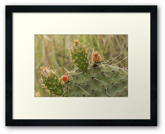 Flowering Cactus by Gary Horner