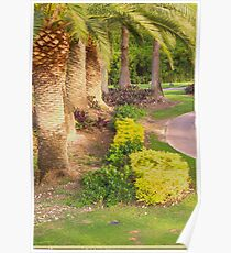 Palm lined golf trail Poster