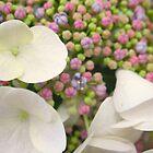 Rainbow Popcorn Flower by MarianBendeth