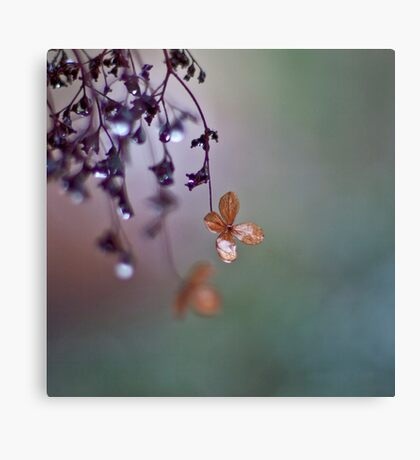 The last tears of winter Canvas Print