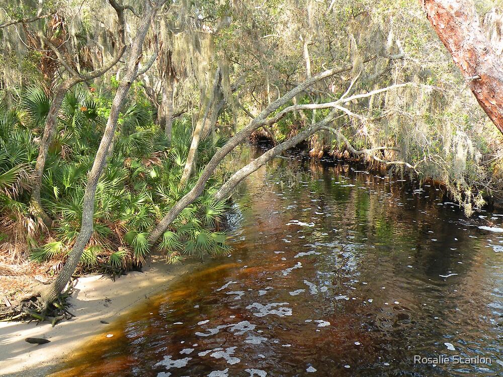 River Bend by Rosalie Scanlon