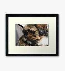 Me!  Baby Chewbacca  Framed Print