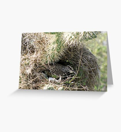 Cactus Wren ~ Nesting Female Greeting Card