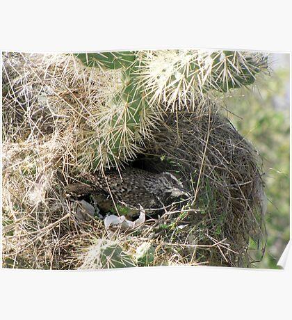 Cactus Wren ~ Nesting Female Poster