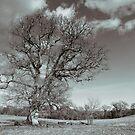 Monochrome Tree at Dinefwr Park by Ken Humphreys