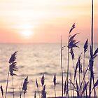 Dune grass in the sunset by Debra Fedchin