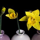 From Bud To Bloom by Lynne Morris