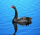 Black Swan on the Pond by Kayleigh Walmsley