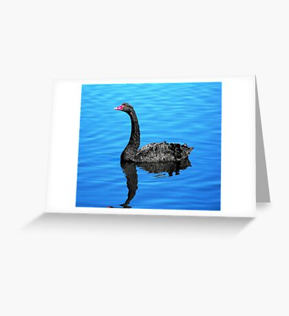 Black Swan on the Pond Greeting Card
