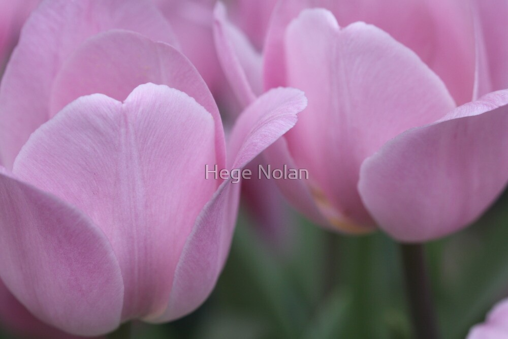 A beautiful pair by Hege Nolan