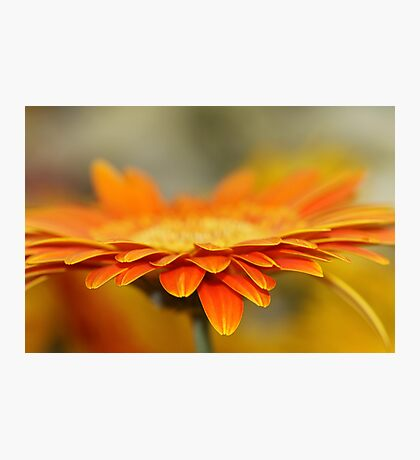 He loves me, he loves me not.... Photographic Print