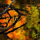 Candy Autumn Stream by Kenneth Haley