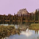 Wilderness by Cassia Beck